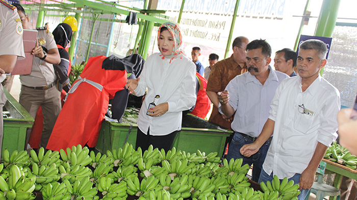 Prospective Cooperation on Tropical Fruits Development